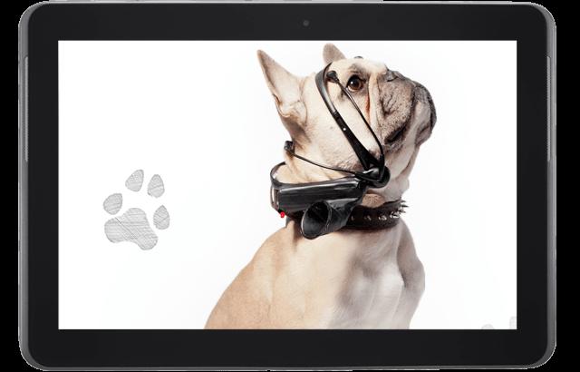 ¡De la mente de tu perro a palabras! Este gadget traduce sus pensamientos