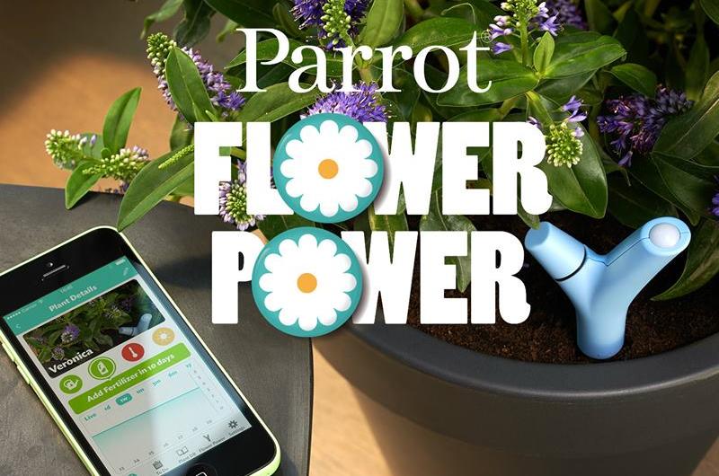 parrot_flower_4