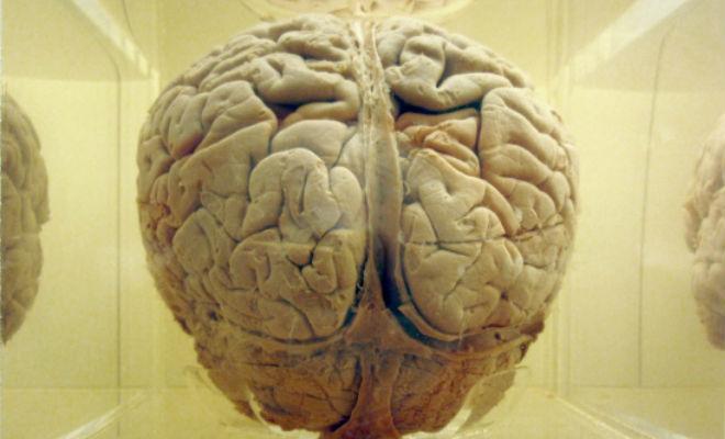 ¿Ganarle a la distracción? Nuestro cerebro tendría un sistema ideal para lograrlo