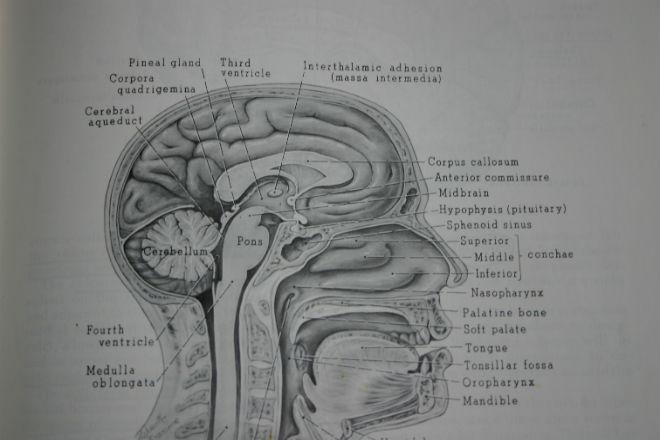 El cerebro, la inspiración para la ingeniería de datos