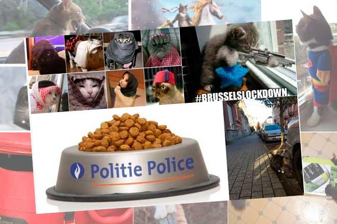"""Belgas """"bombardean"""" con gatos en Twitter para despistar a terroristas"""