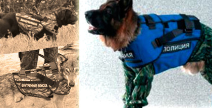 Desarrollan chalecos antibalas para perros (muy bien dotados)