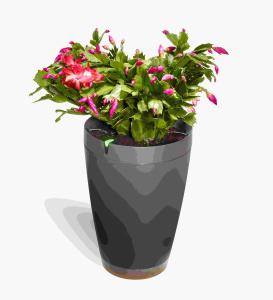 """""""Parrot Pot"""" una maceta inteligente para las plantas"""