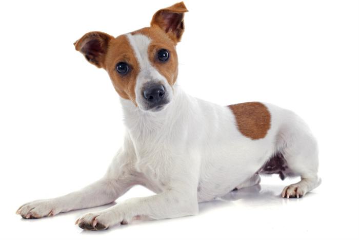 Clonar a tu perro es posible