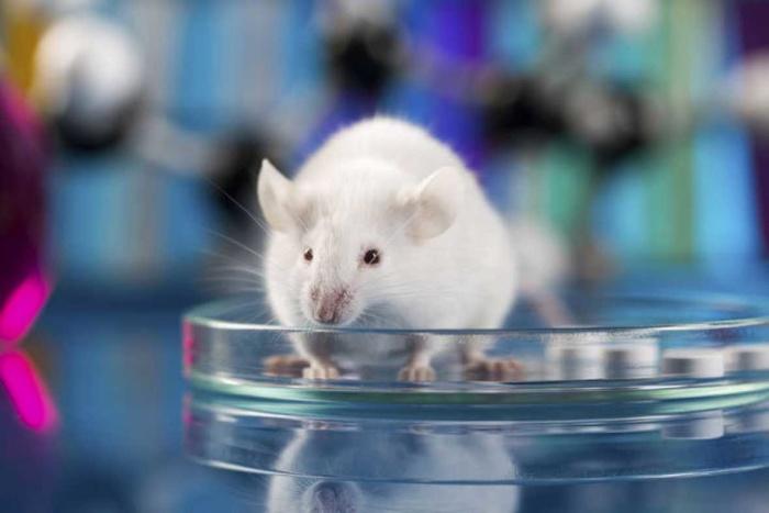 """Logran """"apagar"""" el instinto asesino en el cerebro de los ratones"""