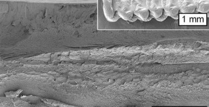 Célula vegetal en la impresión 3D