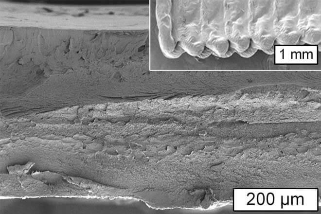 Célula vegetal: la clave del futuro en la impresión 3D