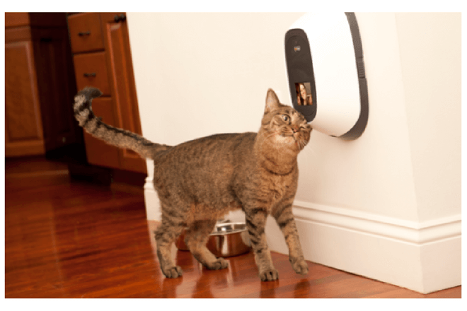 Petchatz te permite interactuar con tu mascota en verano