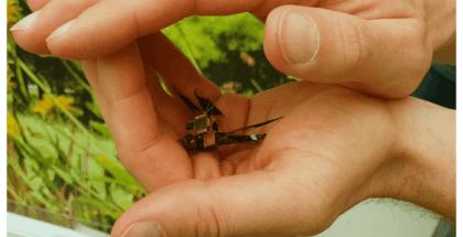 El dron más pequeño del mundo es un insecto
