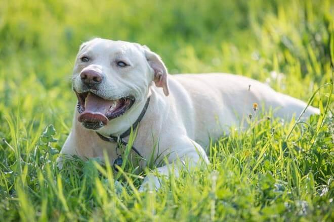Conoce al perro que detecta cáncer de pulmón a través del olfato