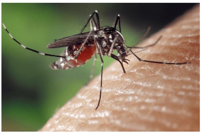 Esta app te dice si un mosquito tiene malaria