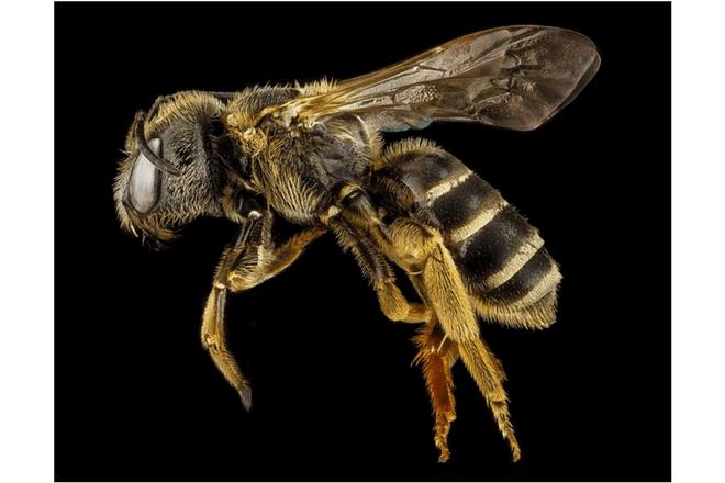 Walmart patenta robots abejas para salvar la agricultura