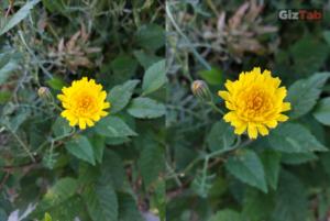 Fotografía tomada con el Redmi Note 5, prueba de zoom