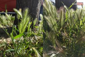Fotografía tomada con el Redmi Note 5, con luz natural - prueba de zoom