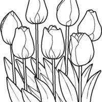dibujos imprimir y colorear de tulipanes