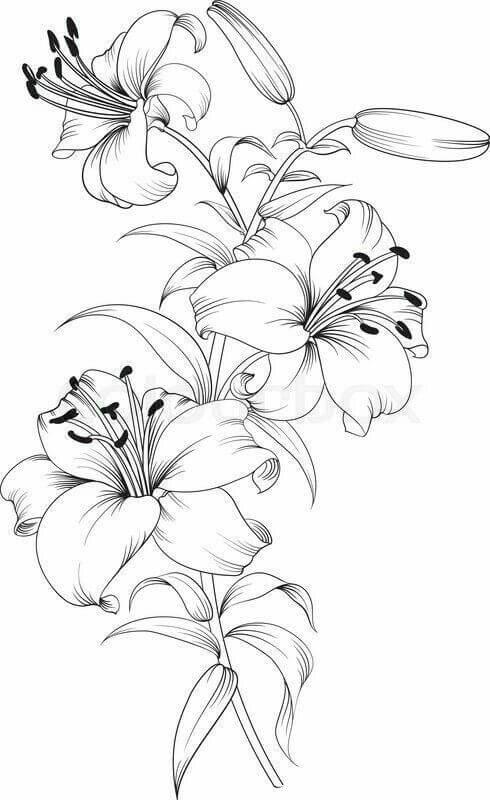 Flores Colorear Flores Imagenes