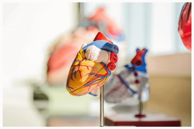 Crean un corazón con tejido humano en impresión 3D